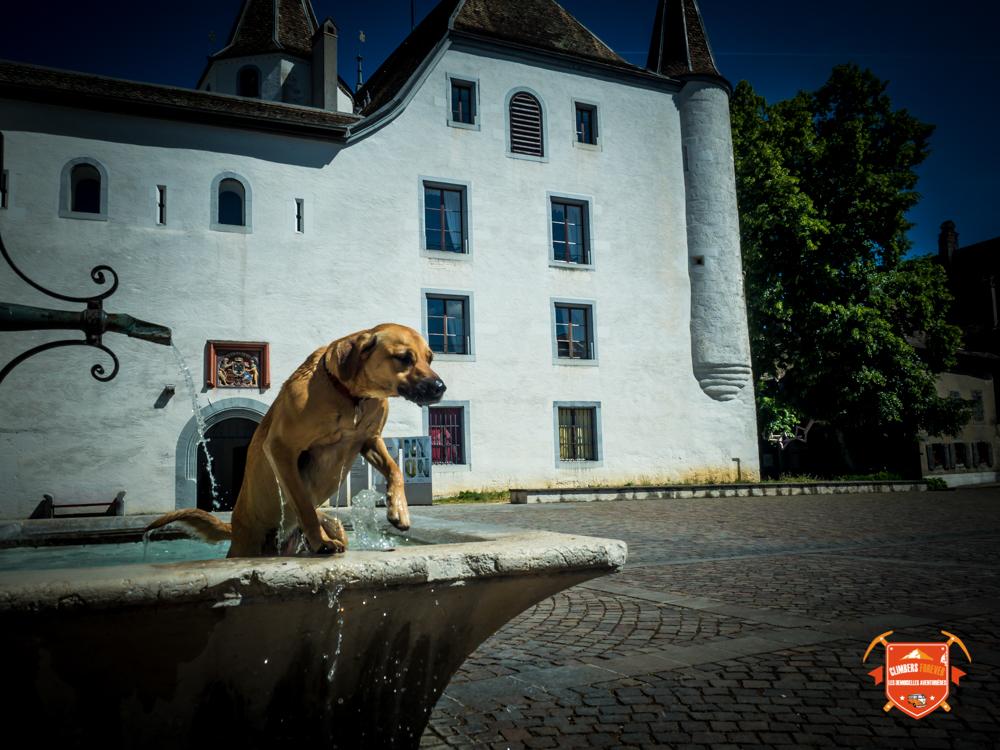 Gaia qui se rafraichit dans la fontaine de Nyon (Suisse)