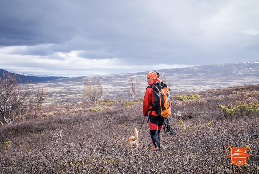Sur le plateau de Dovrefjell Amélie scrupte le paysage à la recherche de la bête